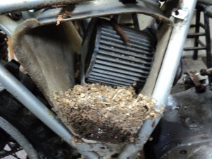 Mouse nest in the airbox